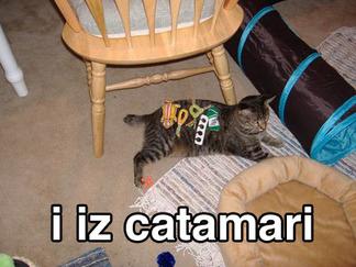 Catamari1_2